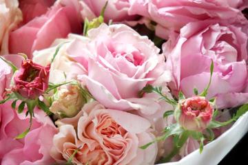 mother-rose-2.jpg