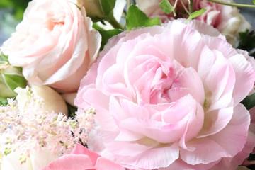 mother-rose-3.jpg