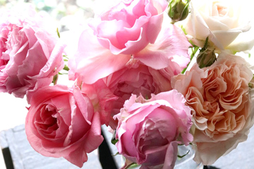 mother-rose.jpg