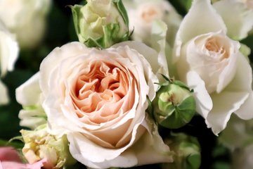 rose-07.jpg