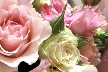rose-08.jpg