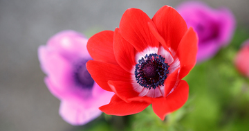 anemone1.jpeg