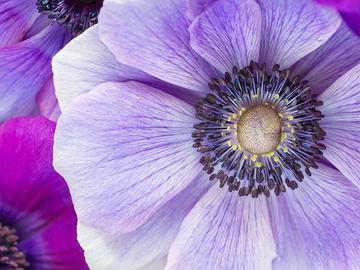anemone2.jpeg