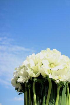anemone2.jpg