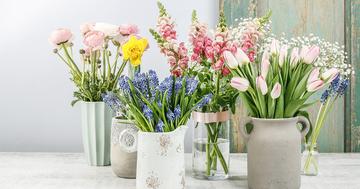 hyacinthus01.jpeg