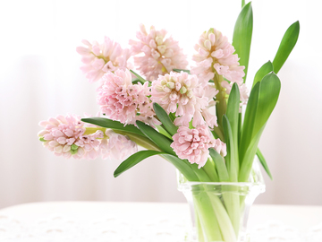 hyacinthus02.jpeg